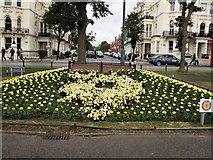 TQ2904 : City in Bloom display, Hove by Paul Gillett