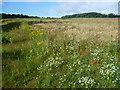 TQ4869 : Wild flowers in a field next to Chapmans Lane by Marathon