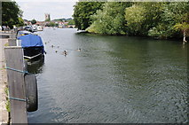 SU7682 : River Thames at Henley by Philip Halling
