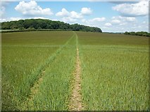 SU9695 : Footpath to Rogers Wood by michael