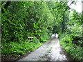 TL9891 : Bradcar Road by Keith Evans