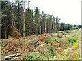 SD7016 : Charter's Moss Plantation by David Dixon