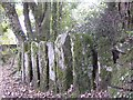 SX2773 : Interesting row of upright stones by Eric Foster