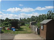 TQ4667 : Kent Road Allotments by David Anstiss