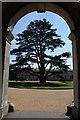 SP9632 : Cedar viewed through an arch by Philip Halling
