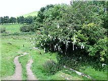 N5877 : Path leading from Loughcrew to the car park past the Wishing Tree by Eric Jones