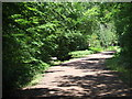 TQ4298 : Path in Epping Forest by Malc McDonald