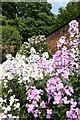 NU1913 : Alnwick Garden by David Robinson