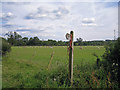 NY4655 : Footpath sign and sheep by Richard Dorrell