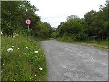 G7876 : Country Road, Seahill and Tuckmill Hill by Kenneth  Allen