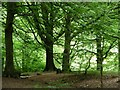 SE1427 : Footpath footbridge, Judy Woods by Christine Johnstone