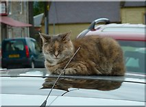 NX4355 : Cat on a Cool Tin Roof by Andy Farrington