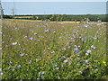 TQ4662 : Flax Field in Charmwood Farm by David Anstiss