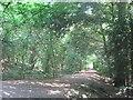 TQ4462 : Permissive path in Cuckoo Wood by David Anstiss