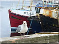 NB4232 : Gull on the Prowl by Colin Smith