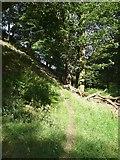 SE0026 : Hebden Royd Footpath 19 in Broad Bottom Wood, Mytholmroyd by Humphrey Bolton