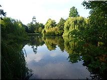 TQ4666 : The lake in Priory Gardens, Orpington by Marathon