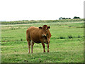 TG3815 : Marsh pastures by Cow Holm, Horning by Evelyn Simak