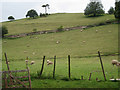 SX8156 : Terraced hillside pasture  by Robin Stott