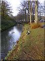 TQ0207 : Arundel Ducks by Gordon Griffiths