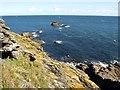 SX7235 : Coastal slope, Bolt Head by Derek Harper