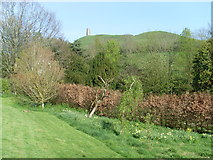 ST5038 : View of Glastonbury Tor from the Chalice Well Garden by David Hillas