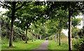 J5978 : Railway path, Donaghadee (3) by Albert Bridge