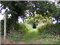 TM2362 : Footpath to the A1120 by Adrian Cable