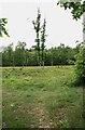TQ1561 : Clear felling, New Wood by Hugh Craddock