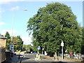 TQ3975 : Lee Terrace, near Blackheath by Malc McDonald