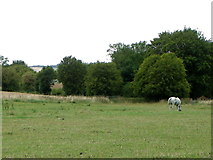 SU1872 : Footpath, Ogbourne St Andrew by Maigheach-gheal