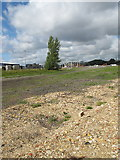 """TQ2182 : Old Oak Common - site of former """"Factory Sidings"""" by David Hawgood"""