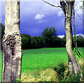 N8265 : Trees in field by Martin Malone