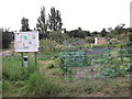 TQ4671 : Sidcup Hill Allotments by David Anstiss
