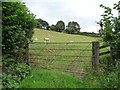 SO3276 : Gated sheep pasture, near The Quern by Christine Johnstone