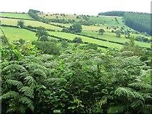 SO3276 : Bracken-filled hedge near The Quern by Christine Johnstone
