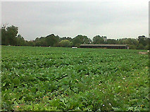 SK8707 : Cabbage field at Egleton by Stephen Craven