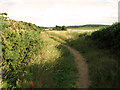 TG0242 : Gorse beside the path to Wiveton Downs by Evelyn Simak