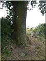 SK6048 : Memorial tree by Alan Murray-Rust