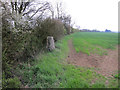 TL6349 : Trig point in a hedge by Hugh Venables