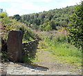 ST1585 : Overgrown track viewed from Mountain Road, Caerphilly by Jaggery