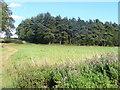 SP3321 : Greenhill Copse by Colin Smith