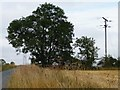 SE5015 : Telegraph pole as ruler by Christine Johnstone