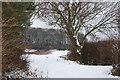 TA1037 : Common Lane copse in winter by bob mason