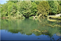 TQ6056 : Basted Mill Pond by N Chadwick