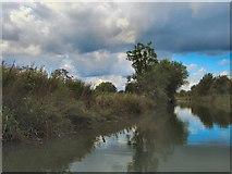 SU7451 : Basingstoke canal by Paul Gillett