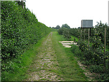 TR3256 : View along bridleway through orchards at Felderland Farm by Nick Smith