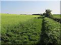 TL6045 : Harcamlow Way by Hugh Venables