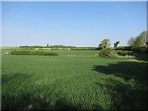 TL6146 : Farmland near Cardinal's Green by Hugh Venables