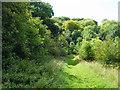 TQ4458 : Path towards Blackbush Shaw by Robin Webster